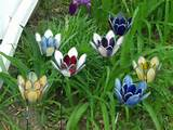 stained glass garden flowers