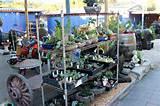 Betascapes - Plants - Succulents
