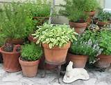 Herb Garden on a Patio