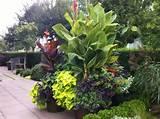 Modern Tropical tropical-landscape