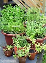 Container Herb Garden - growing perennial herbs (via www.GardenTherapy ...