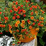 container gardening picture of fall decorations - pumpkin planter with ...