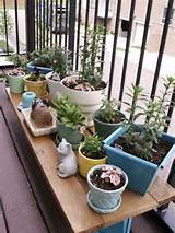 ... Patio Garden Ideas : Innovative Nice Plants Apartment Patio Garden