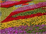 picture of rainbow flowers at epcot flower garden in disneyworld