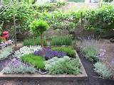 how to make an herbal knot garden