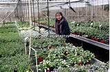 Garden Centre plant nursery, Ladybird Nursery, Gromford, Suffolk ...
