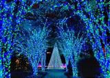 atlanta botanical garden holiday lights