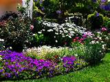 Flower Bed Ideas For Full Sun Flower garden full sun