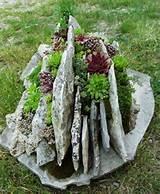 succulent planter jpg