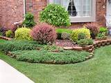 trees and others trees and shrubs for more information ask our expert