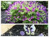 5875 petunias and whimsical garden art