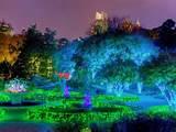 atlanta botanical gardens holiday lights parterre