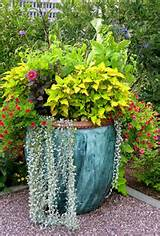 Container Garden Ideas with Unique Designs