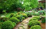 , Spectacular Plant Decoration Ideas: Agreeable Backyard Landscape ...