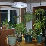 indoor garden home plants indoor garden with lights home design ideas