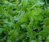 online webstore vegetable seeds lettuce