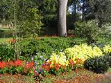 summer flower beds add color