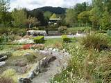 garden plants indoor japanese rock garden nnxinhua japanese zen garden