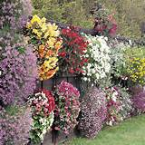 Flower Gardens Ideas 450x450 Flower Gardens Ideas