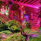 Several Factors to Help You Choose the Best Indoor Gardening Lights