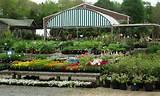 -nursery-delray-beach-landscape-nursery-landscape-nursery-garden ...