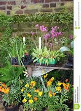 Potted colourful flowering plants and herbs in a garden standing ...