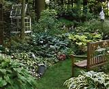 shade garden i need to make my hostas look like this