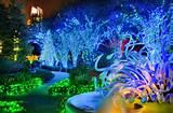 atlanta botanical garden lights chihuly by joey ivansco jpg