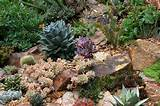 Rock garden with succulents in bay area