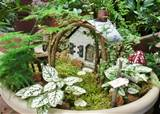 Fairy gardens anyone?