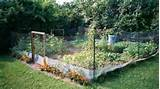 vegetable garden fence ideas homes gallery