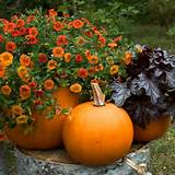 container gardening picture of pumpkin planters