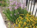 Flower Bed Ideas For Full Sun All can take full sun.