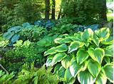 hostas-in-colorful-shade-garden