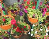 LAWN GRASS, GARDENING PLANTS, POT PLANTS, FLOWER PLANTS AND ALL