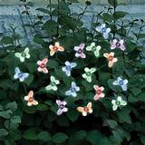 Home Solar Powered Butterfly String Lights