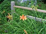 simple fence ideas simple fence ideas