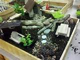 Fairy Gardens | Best Indoor Fairy Garden