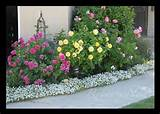 front gardens – its robyn my front garden flower bed plan [652x468 ...