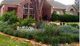 of Texas Natives and adaptives to use in a rain garden Rain Garden ...
