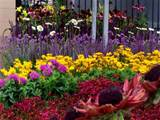 flower bed ideas for garden content which is grouped within ideas