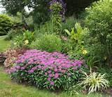 perennial garden - monarda forground