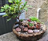 ... 800x693 Photos Four New D I Y Container Miniature Fairy Gardens