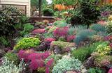 gorgeous lush rock garden in flower in spring on slope hillside house