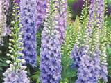 how to plant perennial flowers plants