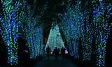 holiday lights on display at atlanta botanical gardens