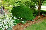 design ideas - common front garden design mistakes gardening landscape ...