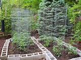related for small backyard vegetable garden ideas