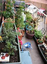apartment garden1 jpg