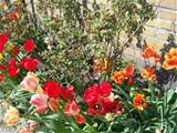 Gardening Spring flowers